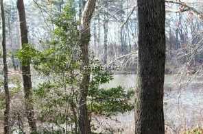 Woodland Dr - Photo 5