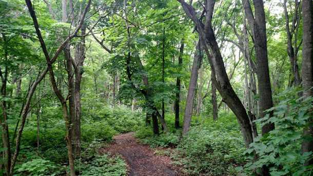 L6 B1 1st Ni Gig Trail - Photo 9