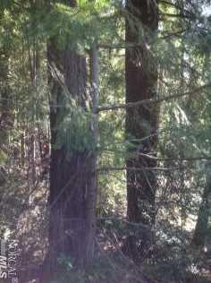 38901 Tiger Tail Trail - Photo 13