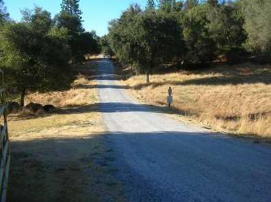 10  Acres Dream Ranch Circle - Photo 7