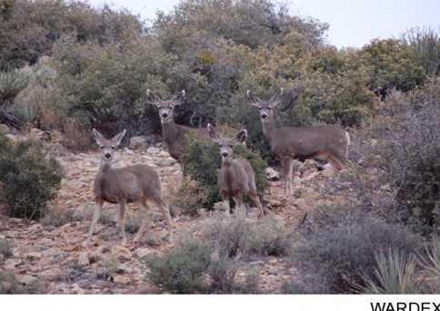 0 2 Lots On Canyon Drive - Photo 11