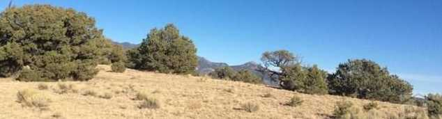 48&49 Colorado Land and Grazing - Photo 3
