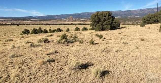 48&49 Colorado Land and Grazing - Photo 9