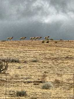 Lot # 50 Eagle Flat Ranch - Photo 11