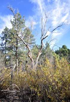 3180 Pine Lakes - Photo 25