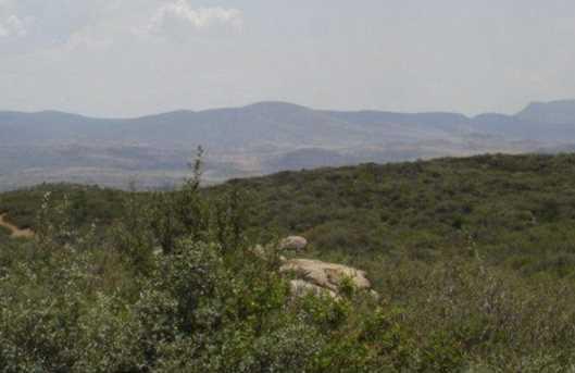 61 Sheridan View Way - Photo 1
