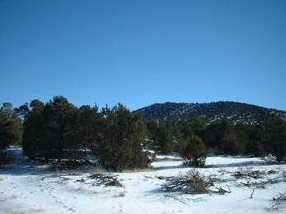 7382 Apache Avenue - Photo 3