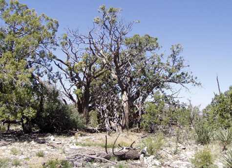 441 Arizona - Photo 5