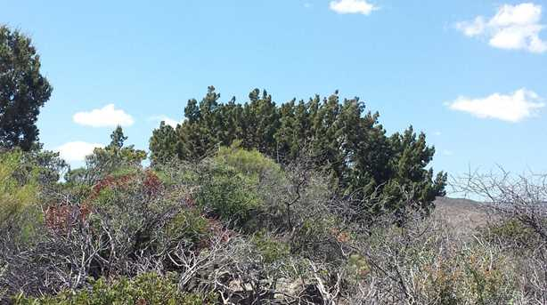 12921 Oak Hills Trail - Photo 11