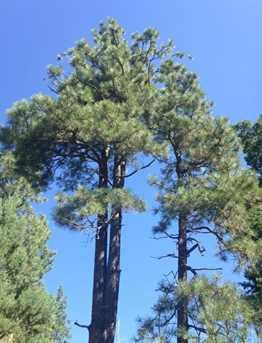 0 Pristine Pines - Photo 7
