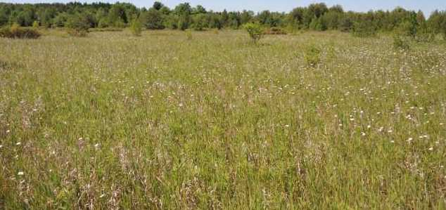 8805 W Meadow Rd - Photo 3