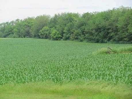 L4 County Road D - Photo 1