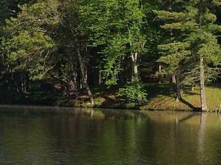 L38 Lake Edge Trail - Photo 1