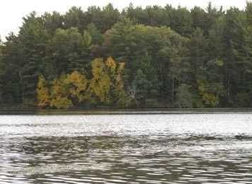 L31 E Shore Trail - Photo 11