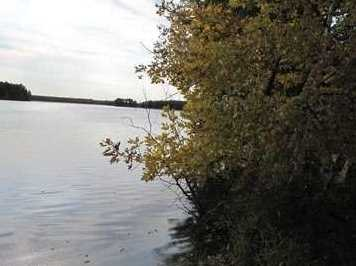 L31 E Shore Trail - Photo 13