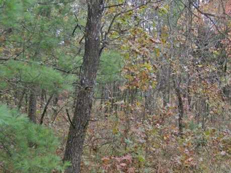 40 Ac Bear Rd - Photo 8