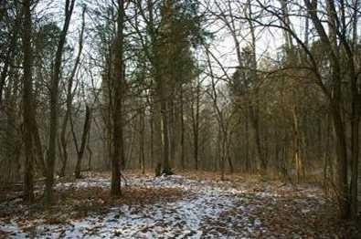 15 Pine Run Lane - Photo 3