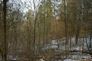15 Pine Run Lane - Photo 5
