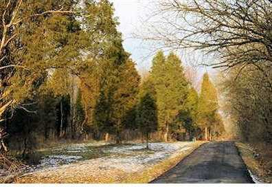 18 Pine Run Lane - Photo 1