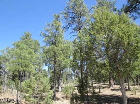 4260 W Sugar Pine Loop - Photo 4