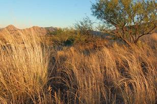4A,B,C,D Off Temporal Canyon Road #. - Photo 1