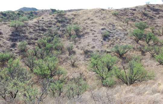 Grey Hawk Trail #1 - Photo 31
