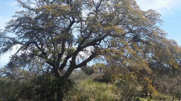 Crn Mt Lemmon Hwy/White Oak Pl #0 - Photo 1