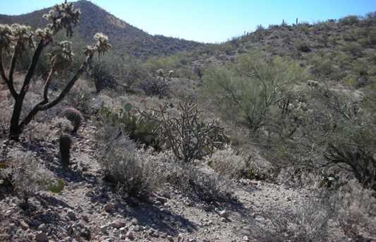 3254 Saguaro Ridge Drive #22 - Photo 13