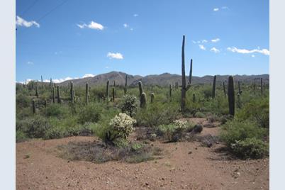 Desert Dove - Photo 1