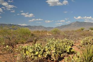 9469 Old Soldier Trail #61 - Photo 1