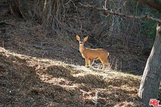 465 Cold Canyon Rd - Photo 63