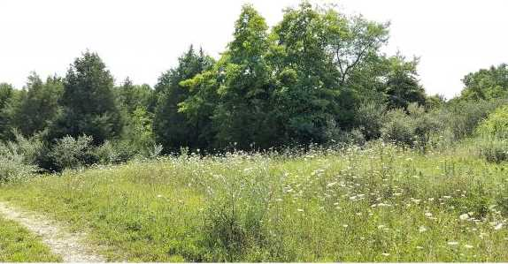 Whispering Pines Ln - Photo 1