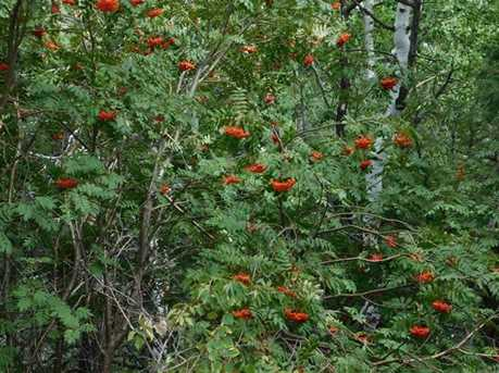13670 Spruce Creek Circle - Photo 21