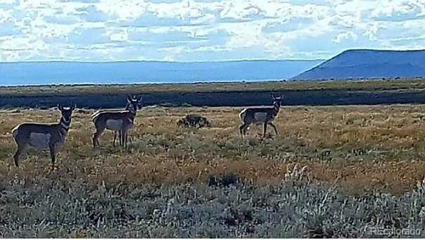 24 Osage Trail - Photo 10