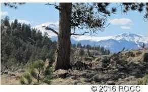 920 Pack Saddle Road - Photo 5