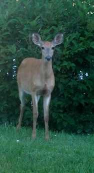 58528 Lashley Rd - Photo 25