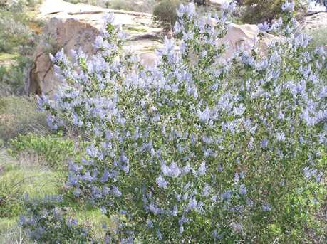 0000 Mahogany Ranch Rd Lot 12 Tr 14000 - Photo 19