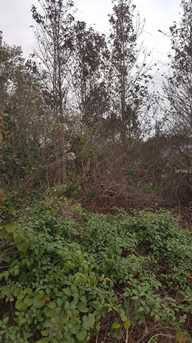 Cooter Pond Road - Photo 3