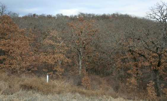 L 590  Cross Timbers - Photo 3