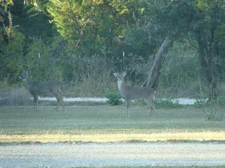 618  County Rd 4270 - Photo 7
