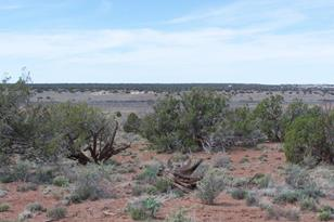 Tbd County Rd 9015 - Photo 1