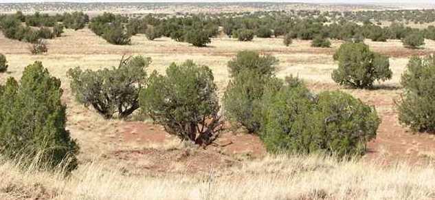 Lot 567 Chevelon Canyon Ranch - Photo 1