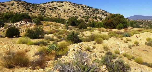 29 Covered Wagon Trail - Photo 31