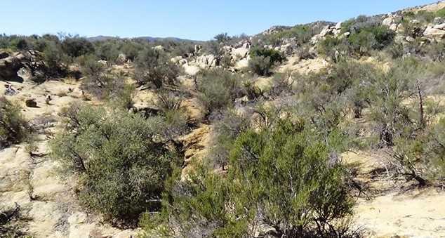 29 Covered Wagon Trail - Photo 38