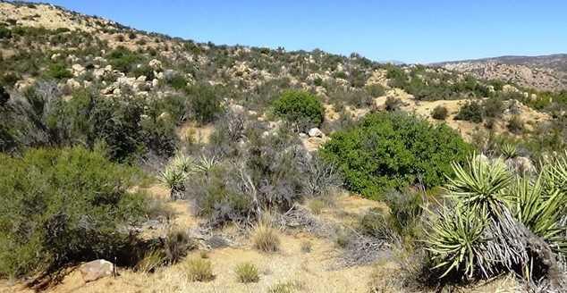 29 Covered Wagon Trail - Photo 8