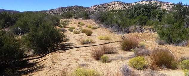 29 Covered Wagon Trail - Photo 4