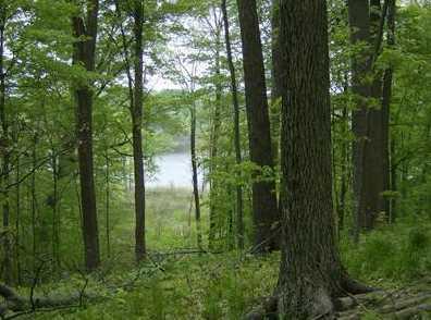 11 Long Lake Drive - Photo 1