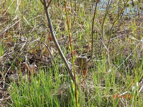 Elk Trail - Photo 31