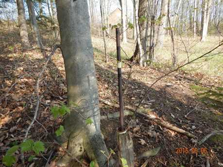 Elk Trail - Photo 27