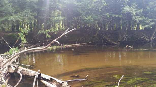 12580 Bear Creek Lane - Photo 1